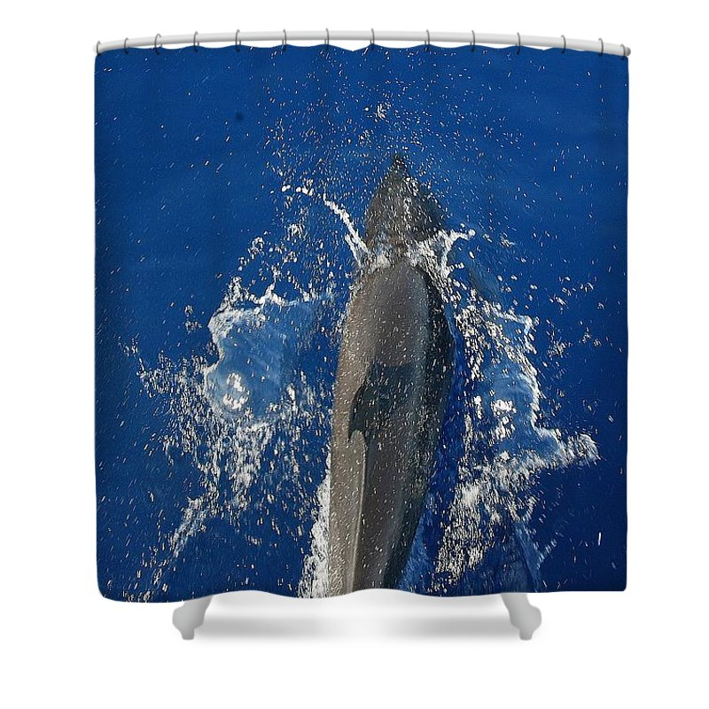 Dolphin Shower Curtain featuring the photograph Dolphin by J R Seymour