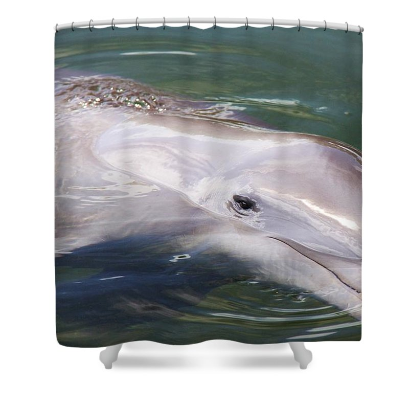 Dolphin Ocean Nature Smart Mammal Smile Shower Curtain featuring the photograph Dolphin by Mitch Cat