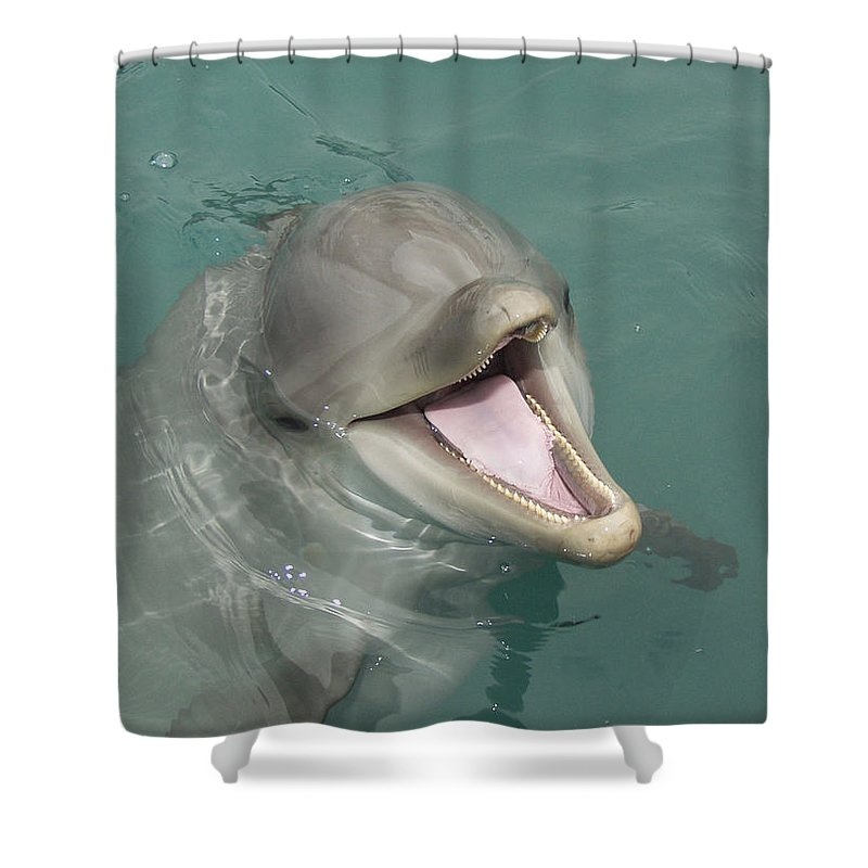 Dolphin Shower Curtain featuring the painting Dolphin by Sean M