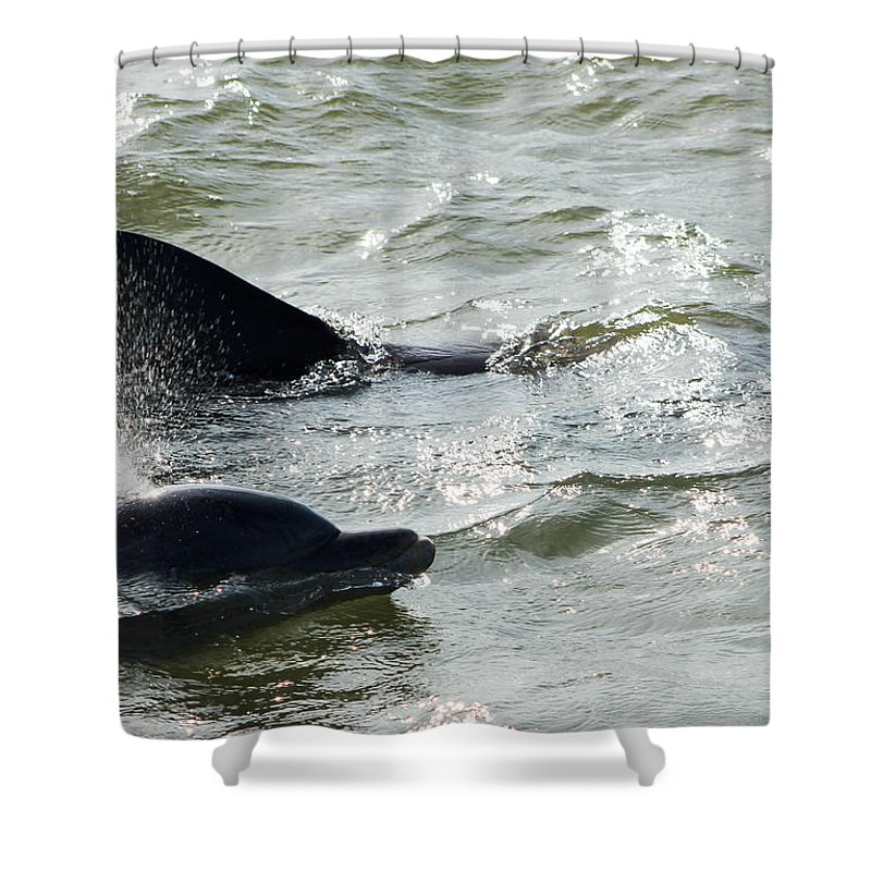 Dolphins Shower Curtain featuring the photograph Dolpins In Estero Bay by David Zuhusky