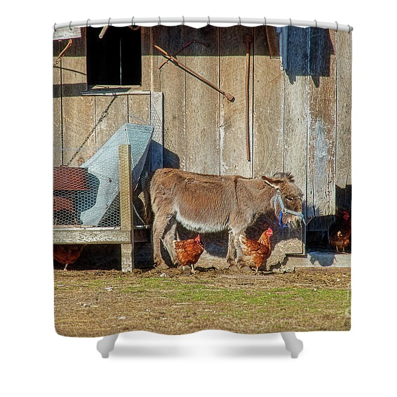 Donkey Shower Curtain featuring the photograph Donkey Goat And Chickens by David Arment