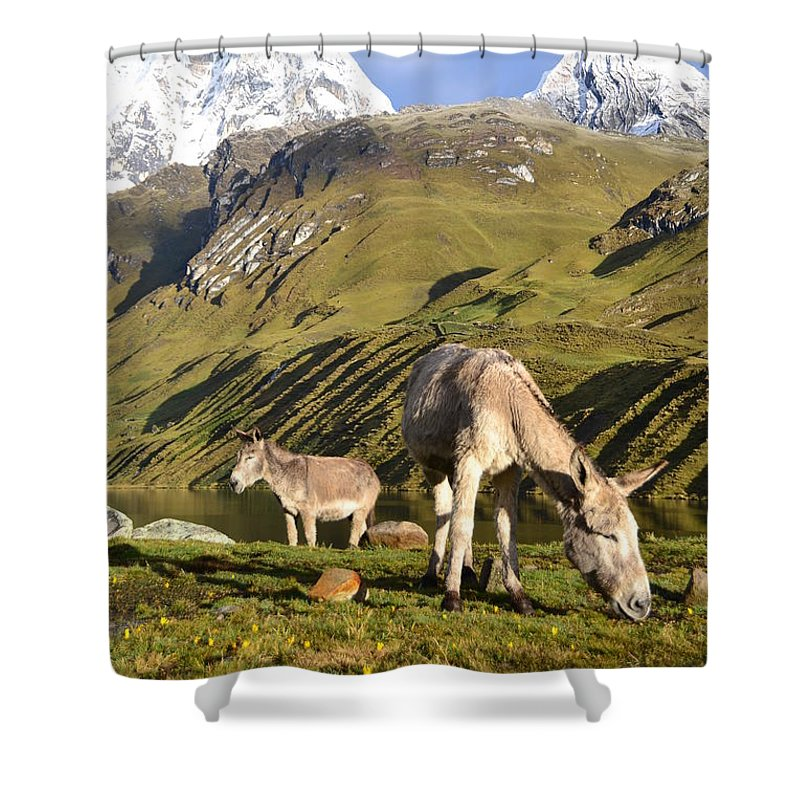 Snowy Shower Curtain featuring the photograph Donkeys Grazing In The Mountains by Harry Coburn