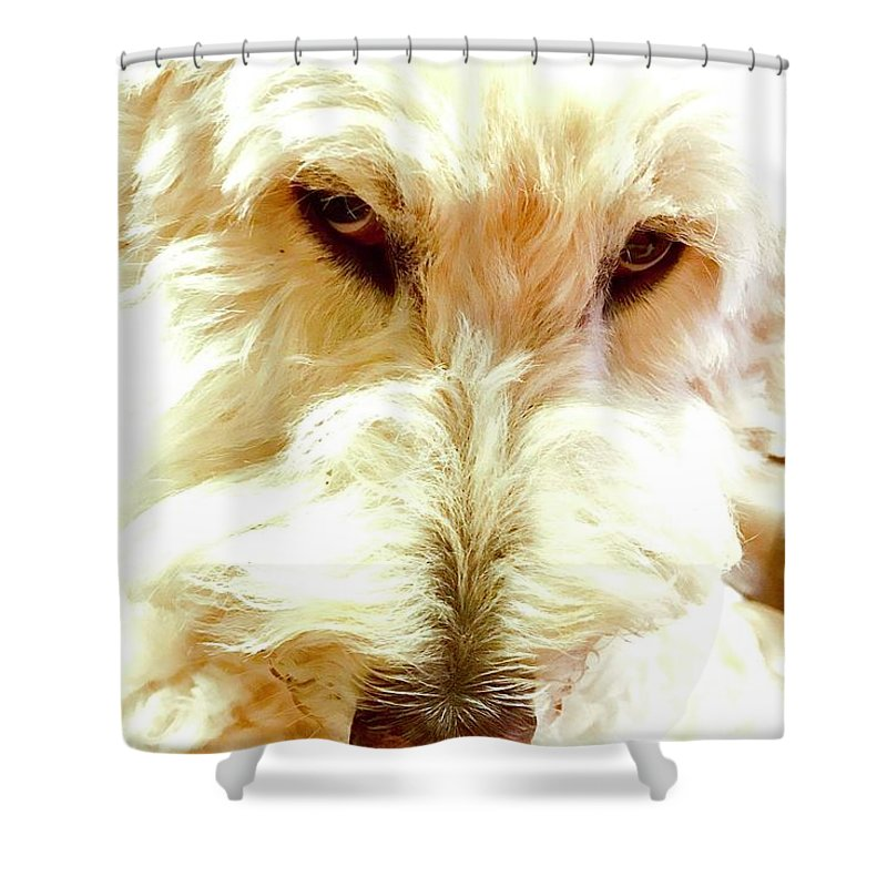 Doodle Diva Shower Curtain For Sale By Alida M Haslett