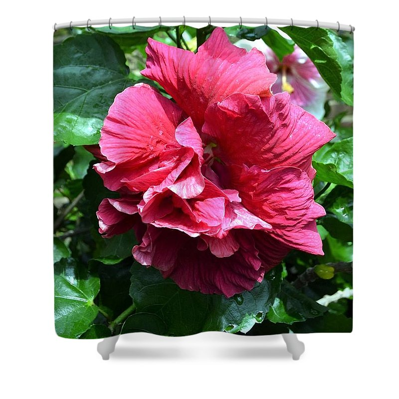 Double Hibiscus Shower Curtain featuring the photograph Double Delight by Deepa Sahoo