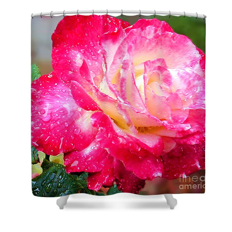 Fine Art Photography Shower Curtain featuring the photograph Double Delight by Patricia Griffin Brett
