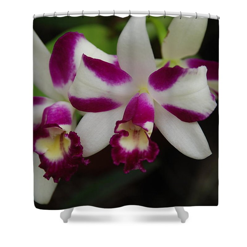 Macro Shower Curtain featuring the photograph Double Orchid by Rob Hans