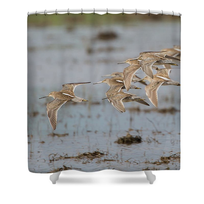Ronnie Maum Shower Curtain featuring the photograph Dowitchers by Ronnie Maum
