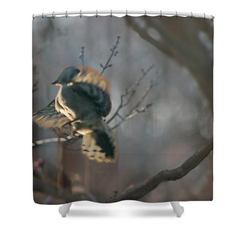 Nature Shower Curtain featuring the photograph Downey Woodpecker by Steve Karol
