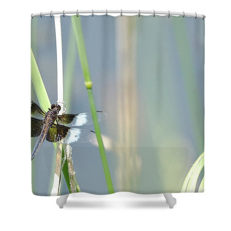 Dangelio Shower Curtain featuring the photograph Dragon Fly by D Angelico