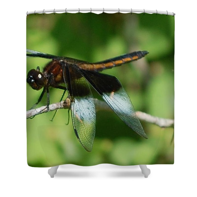 Digitall Photo Shower Curtain featuring the photograph Dragon Fly by David Lane