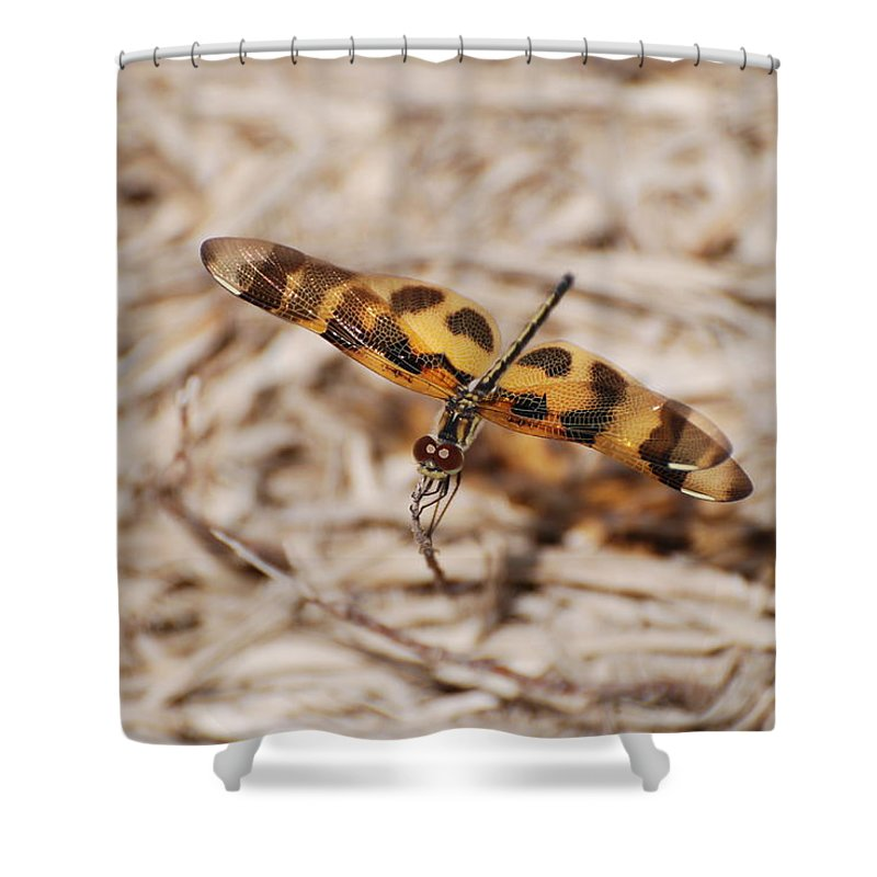 Nature Shower Curtain featuring the photograph Dragon Fly by Rob Hans