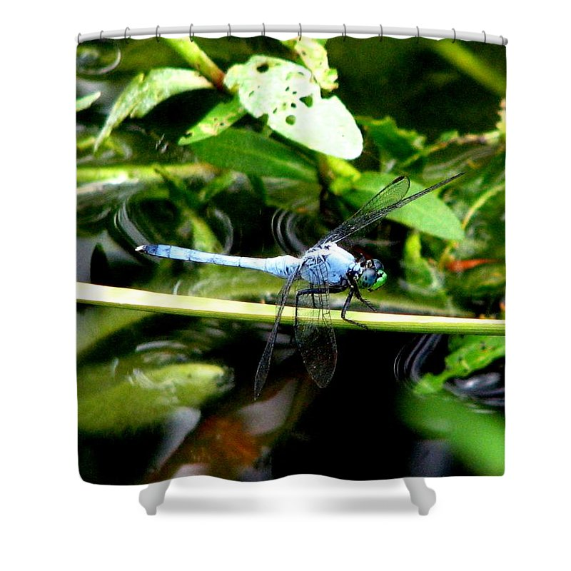 Dragonfly Shower Curtain featuring the photograph Dragonfly 9 by J M Farris Photography