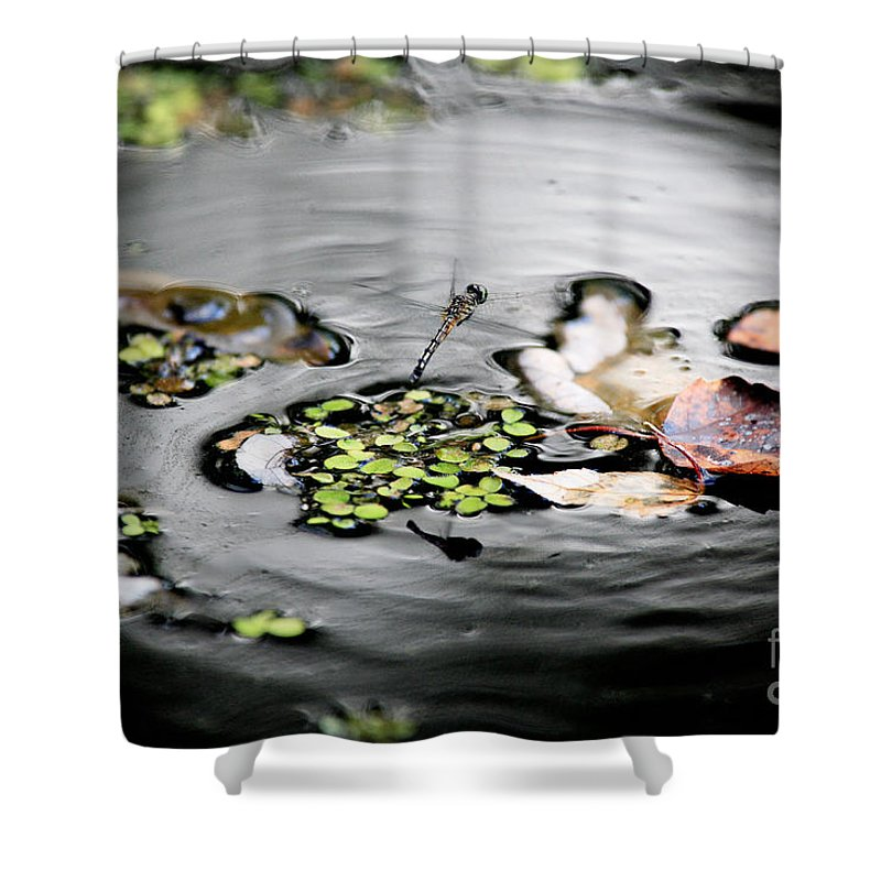 Dragonfly Shower Curtain featuring the photograph Dragonfly Above Leaves by Matt Suess