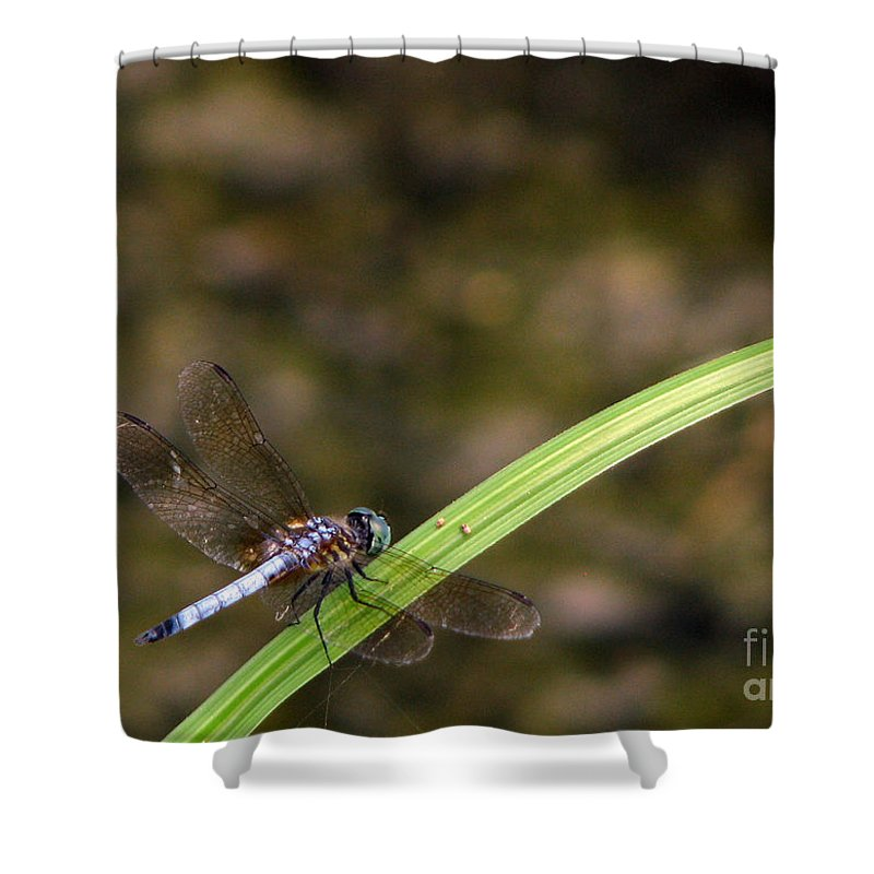 Dragonfly Shower Curtain featuring the photograph Dragonfly by Amanda Barcon