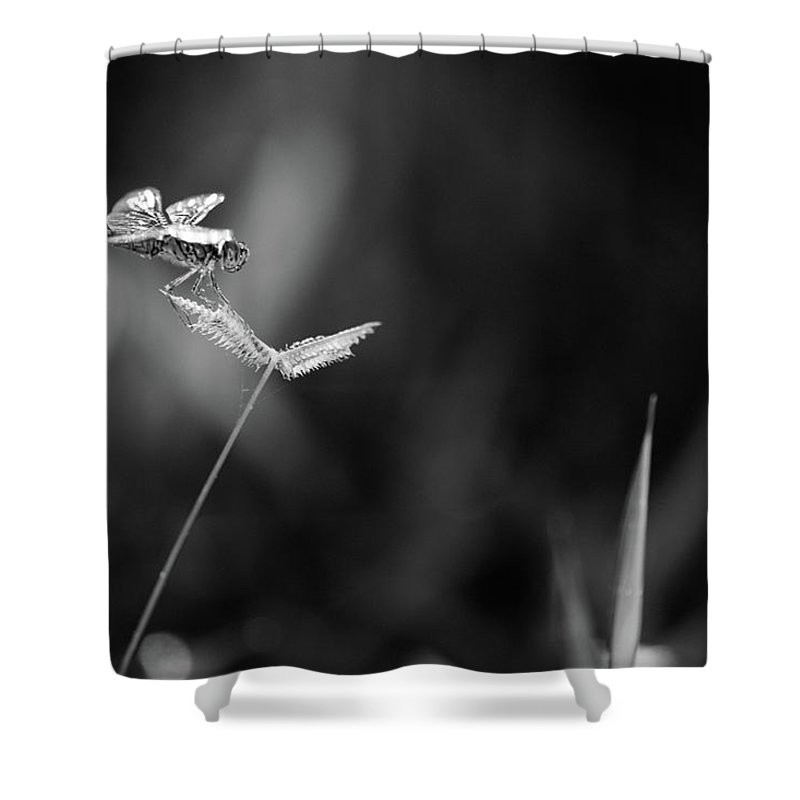 Dragonfly Shower Curtain featuring the photograph Dragonfly Is Resting On The Glass by Thitiwut Thitiprasert