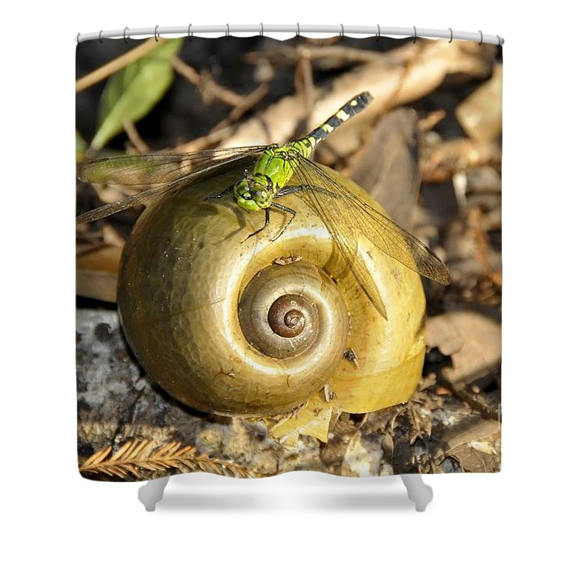 Dragonfly Shower Curtain featuring the photograph Dragonfly On Snail by David Lee Thompson