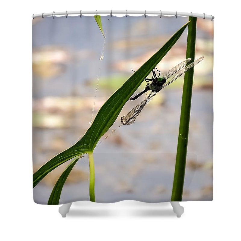 Dragonfly Resting Upside Down Shower Curtain featuring the photograph Dragonfly Resting Upside Down by Cynthia Woods