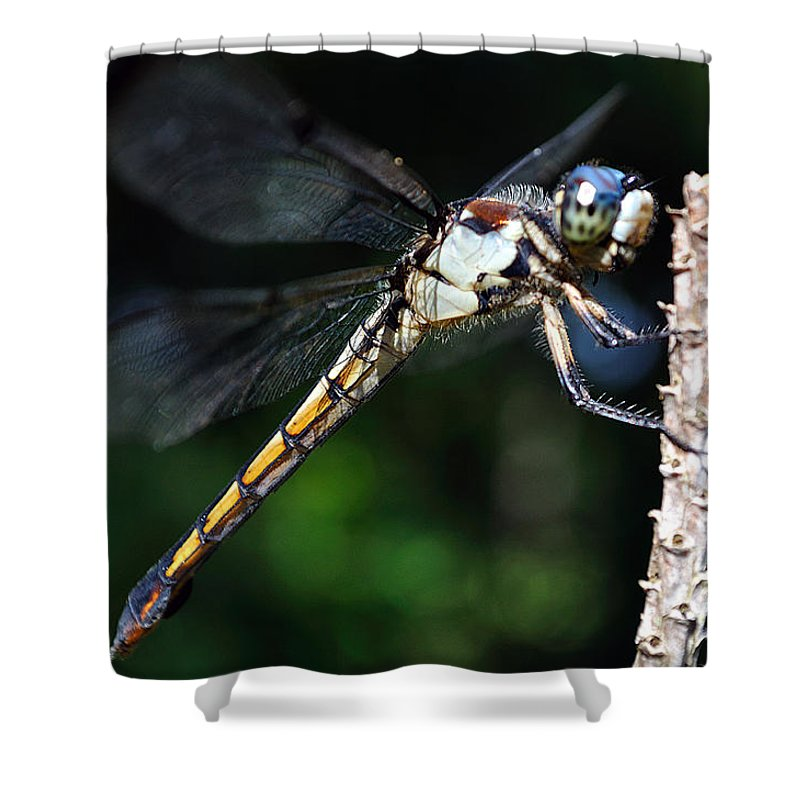 Animal Shower Curtain featuring the photograph Dragonfly Revisited by Kenneth Albin