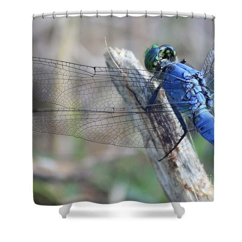 Dragonfly Shower Curtain featuring the photograph Dragonfly Wing Detail by Carol Groenen