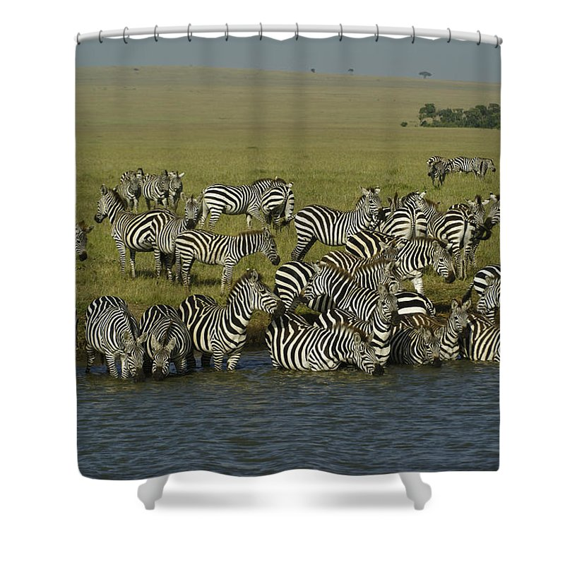 Africa Shower Curtain featuring the photograph Drawn To Water by Michele Burgess