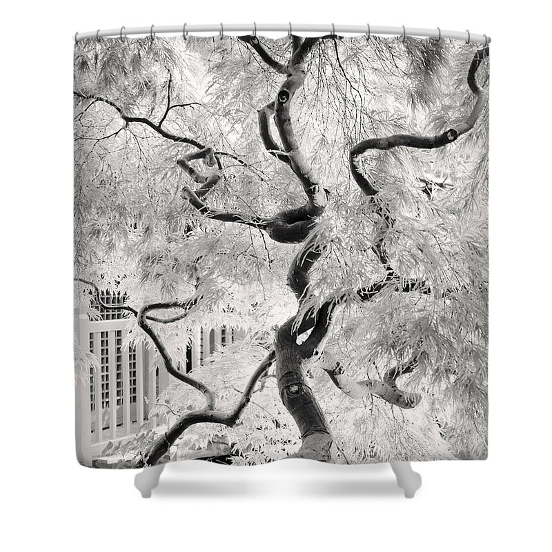 Bw Shower Curtain featuring the photograph Dream Tree by Dorit Fuhg