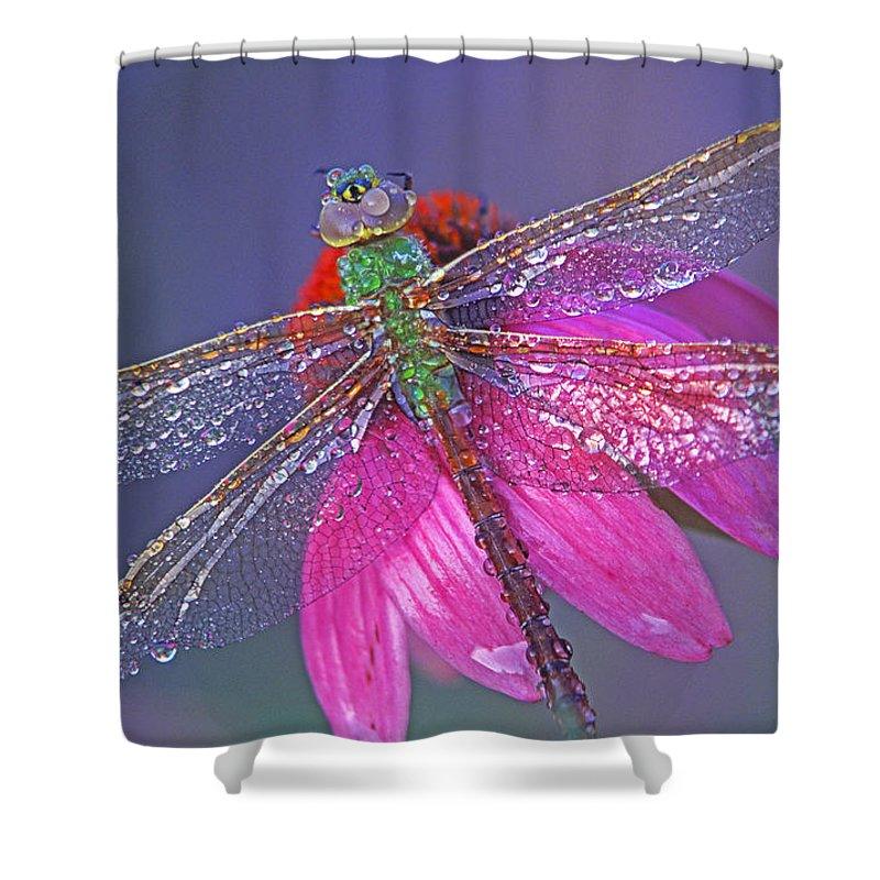 Dew Covered Dragonfly Rests On Purple Cone Flower Shower Curtain featuring the photograph Dreaming Dragon by Bill Morgenstern