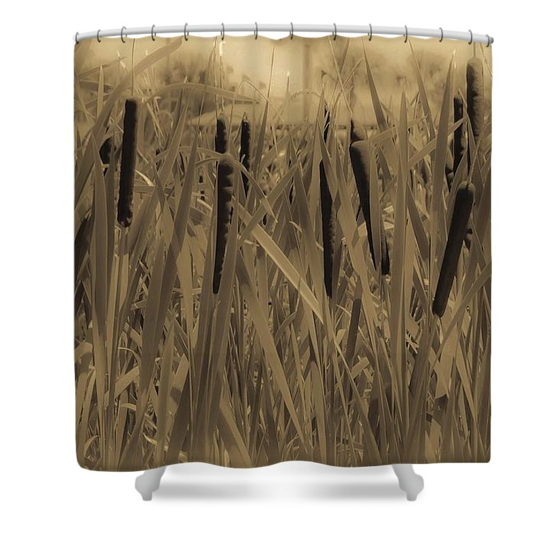 Cattails Shower Curtain featuring the photograph Dreaming Of Cattails by DigiArt Diaries by Vicky B Fuller