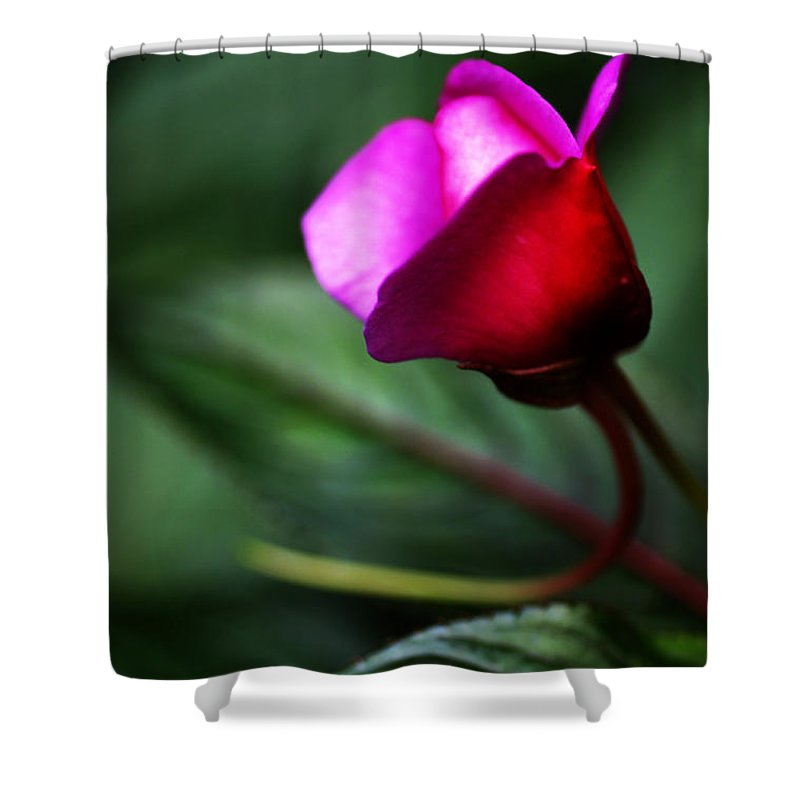Rose Shower Curtain featuring the photograph Dreams Realized by Linda Shafer