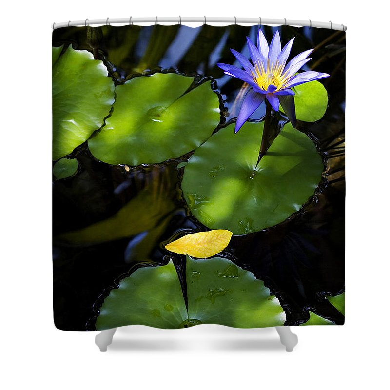 Lotus Shower Curtain featuring the photograph Dreamy Lotus by Marilyn Hunt