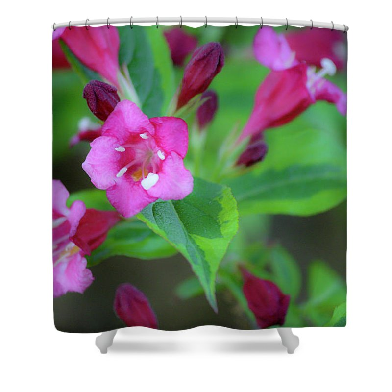 Wigelia Shower Curtain featuring the photograph Dreamy Wigelia by Teresa Mucha
