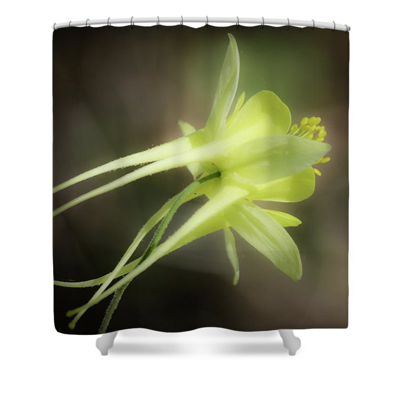 Columbine Shower Curtain featuring the photograph Dreamy Yellow Columbine by Teresa Mucha