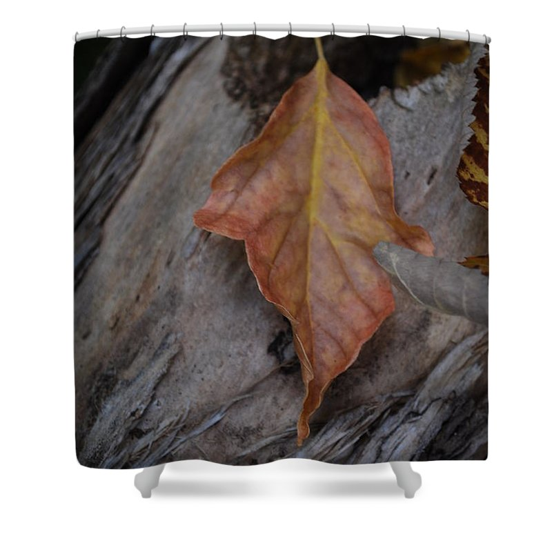Fall Shower Curtain featuring the photograph Dried Leaf On Log by Heather Kirk