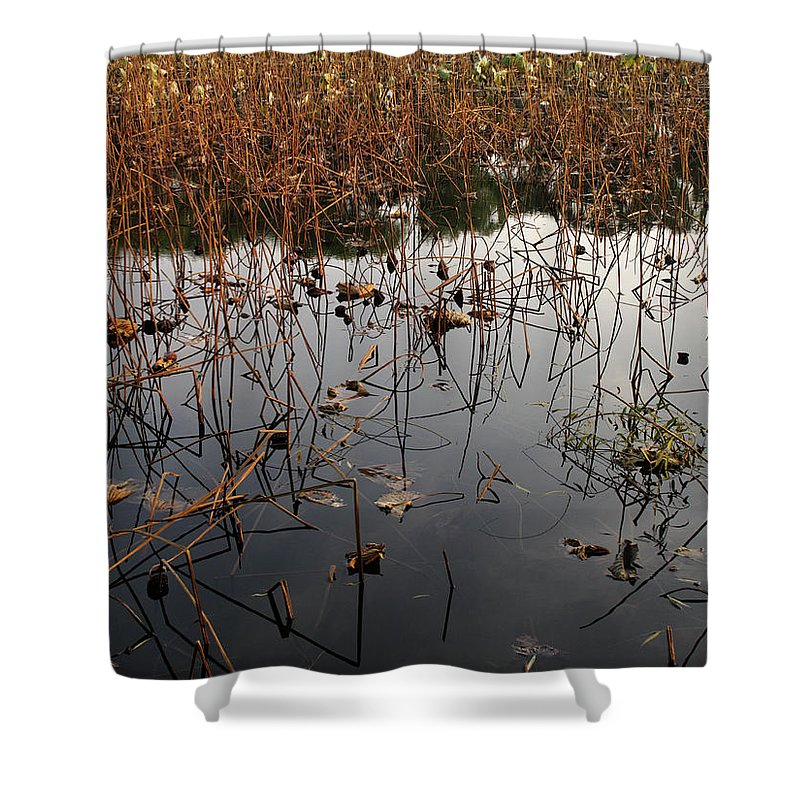 Horizontal Shower Curtain featuring the photograph Dried Lotus In The Lake by Stefania Levi
