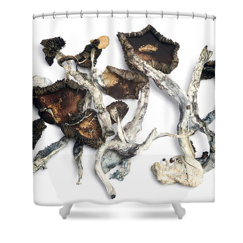 Biology Shower Curtain featuring the photograph Dried Psilocybe Cubensis by Ford McCann