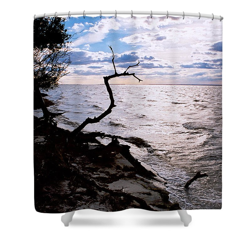 Barnegat Shower Curtain featuring the photograph Driftwood Dragon-barnegat Bay by Steve Karol