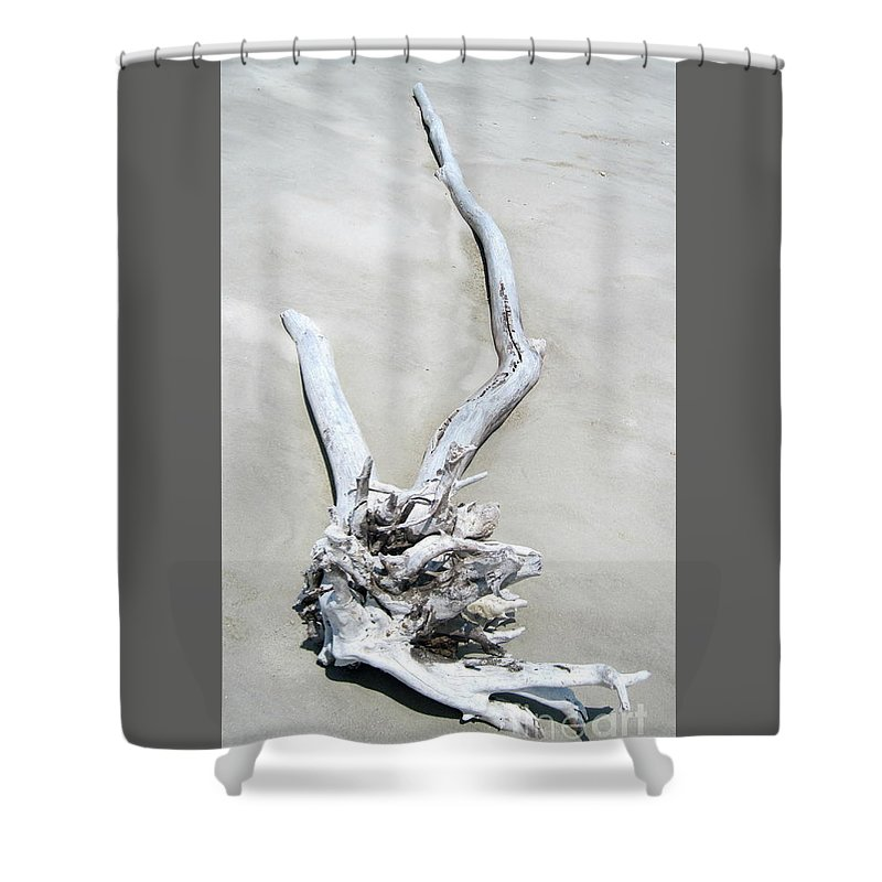 Dead Shower Curtain featuring the photograph Driftwood On The Beach by Camryn Zee Photography