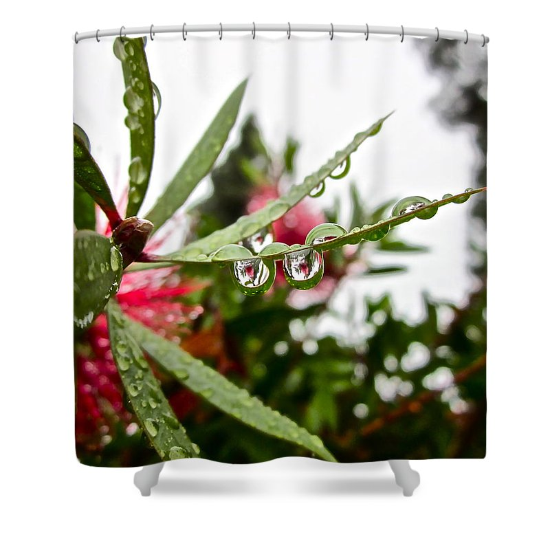 Rain Drop Shower Curtain featuring the photograph Drip And Drop by Gwyn Newcombe
