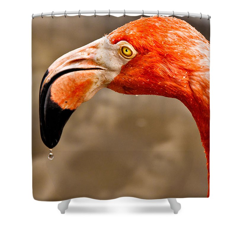 Flamingo Shower Curtain featuring the photograph Dripping Flamingo by Christopher Holmes