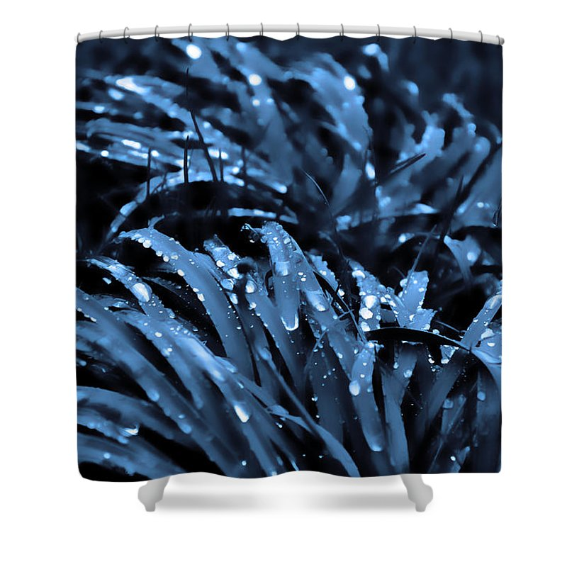 Drops And Blue Grass Shower Curtain featuring the photograph Drops And Blue Grass by Damijana Cermelj
