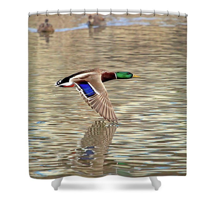 Mallard Duck Shower Curtain Featuring The Photograph Tales By Donna Kennedy