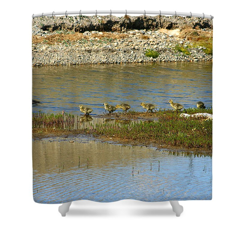 Ducks Shower Curtain featuring the photograph Ducks In A Row by Anthony Jones