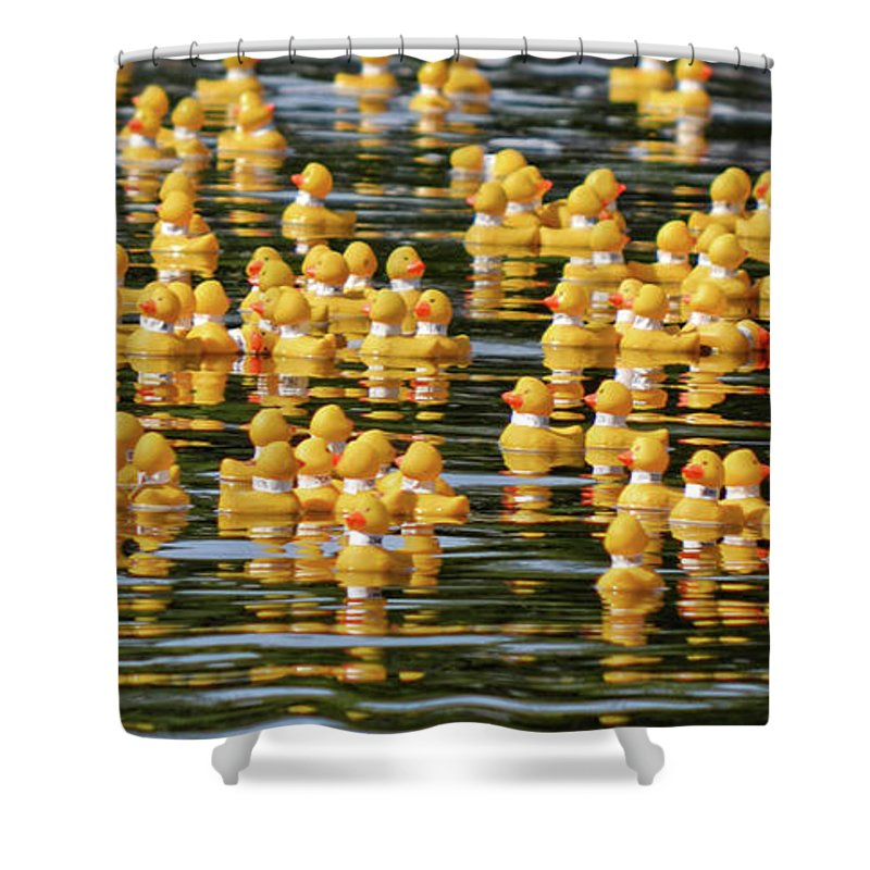 Yellow Shower Curtain featuring the photograph Ducks In A Row by Traci Cottingham