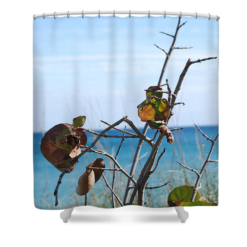 Ocean Shower Curtain featuring the photograph Dune Plants by Rob Hans