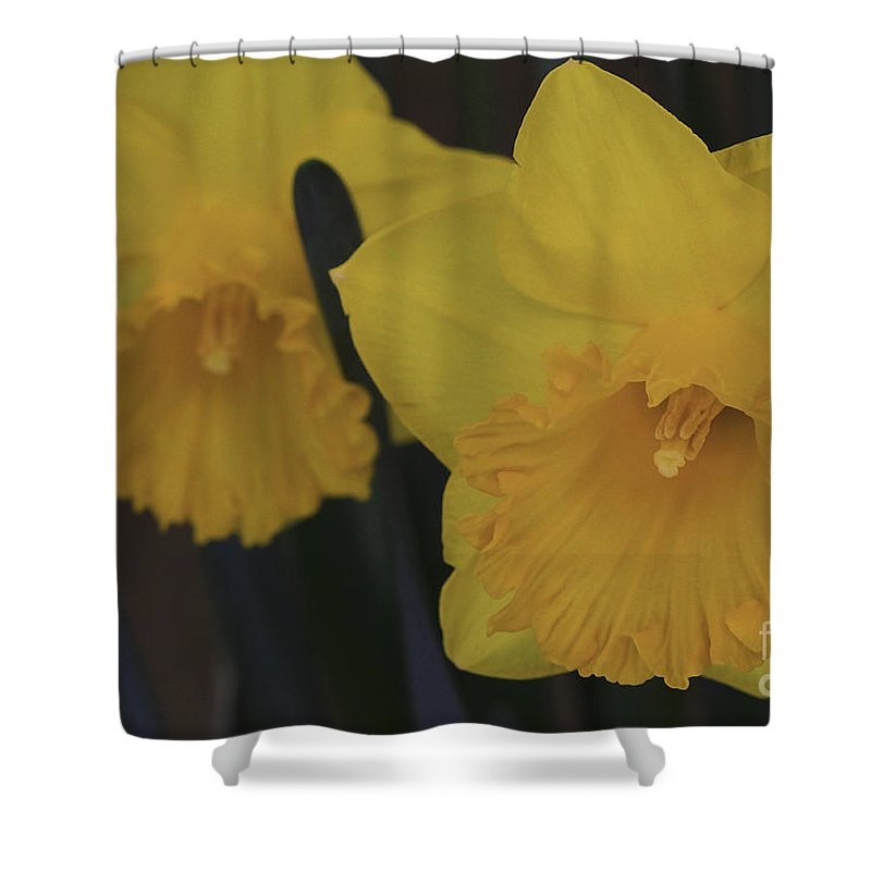 Daffodils Shower Curtain featuring the photograph Duo In Daffodils by Deborah Benoit