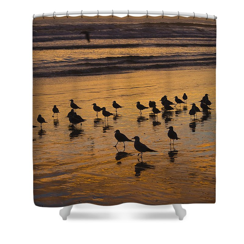 Beach Ocean Seagull Gull Bird Birds Sand Wave Waves Sun Sunrise Reflection Shaddow Sky Cloud Shower Curtain featuring the photograph Eager Anticipation by Andrei Shliakhau