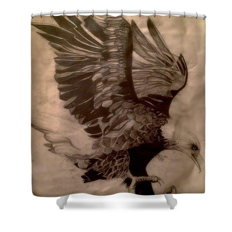 Eagle Wild Mountains Iqbal Shaheen Bird Storm Drawing