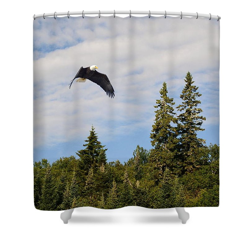 Eagle Shower Curtain featuring the photograph Eagle At Scott Brook by Harry Moulton