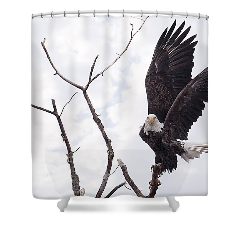 Eagle Shower Curtain featuring the photograph Eagle by Everet Regal