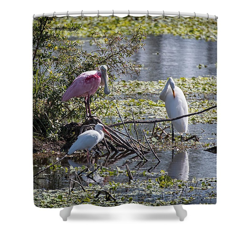 Florida Shower Curtain featuring the photograph Eagle Lakes Park - Roseate Spoonbill And Friends, Socializing by Ronald Reid