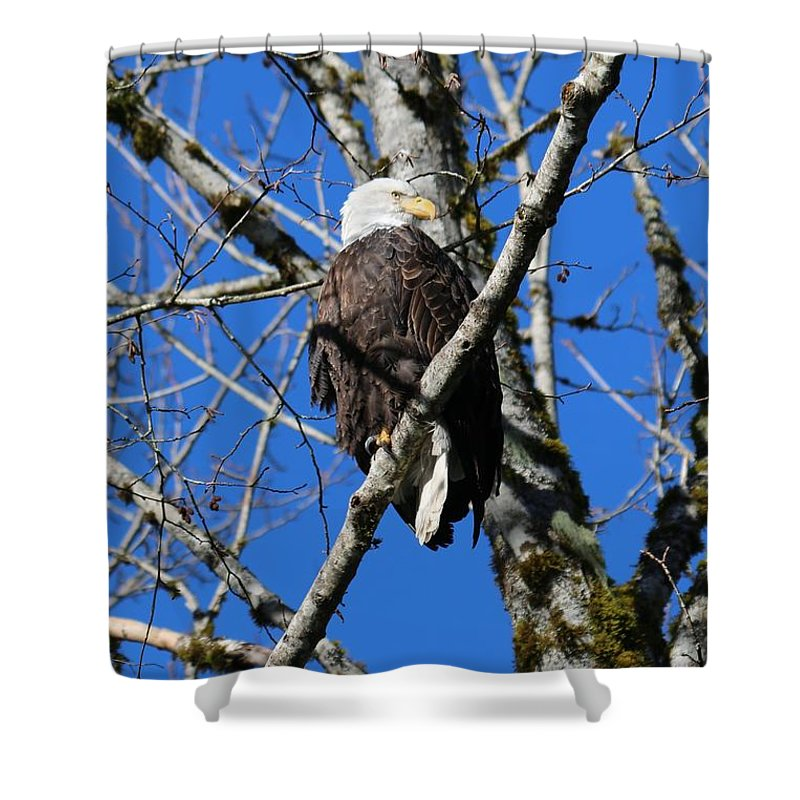 Nature Shower Curtain featuring the photograph Eagle by Lisa Spero
